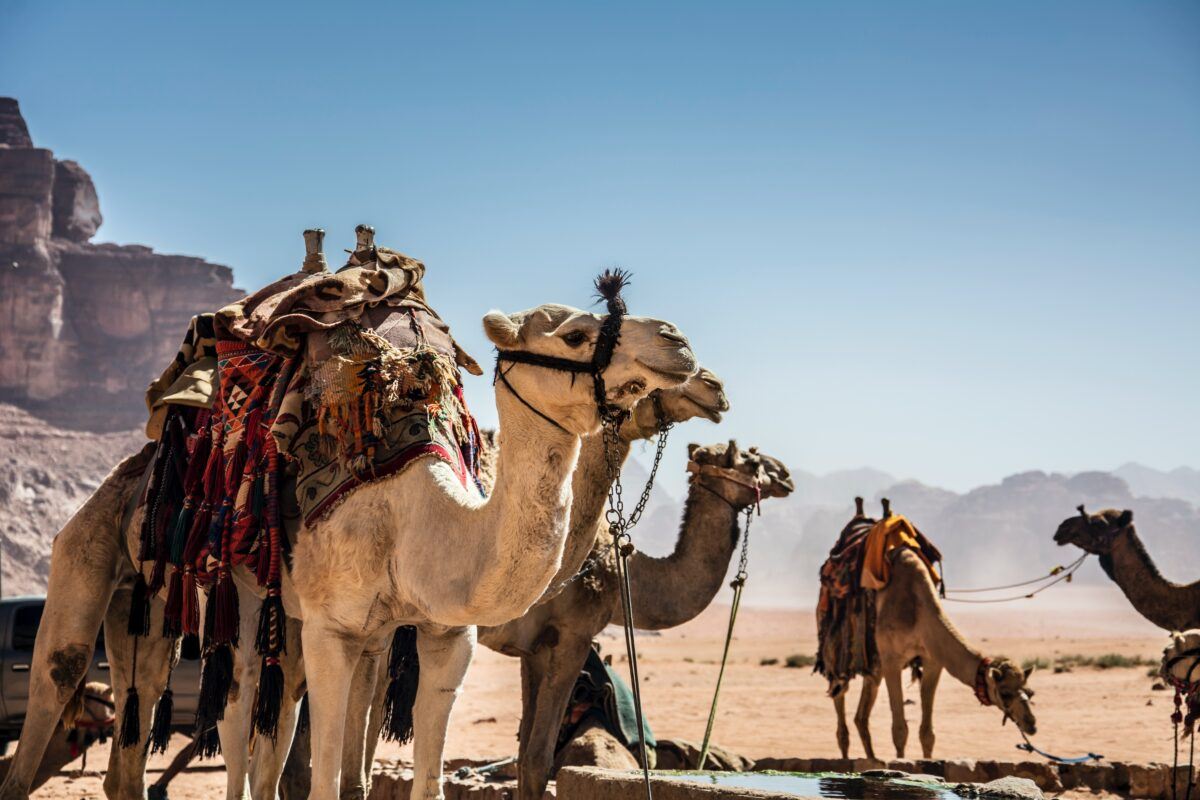 Grand Arabian Gulf Cruise on Crystal: Exploring Medicine, Dentistry & the Middle Eastern Healthcare Model